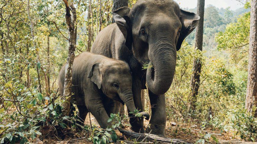 elefanti in un santuario per animali selvatici