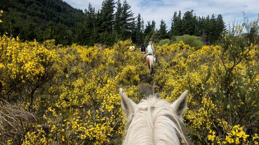 sentiero a cavallo