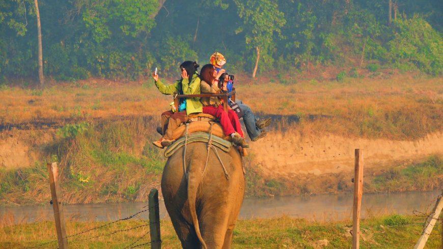 turismo degli animali selvatici