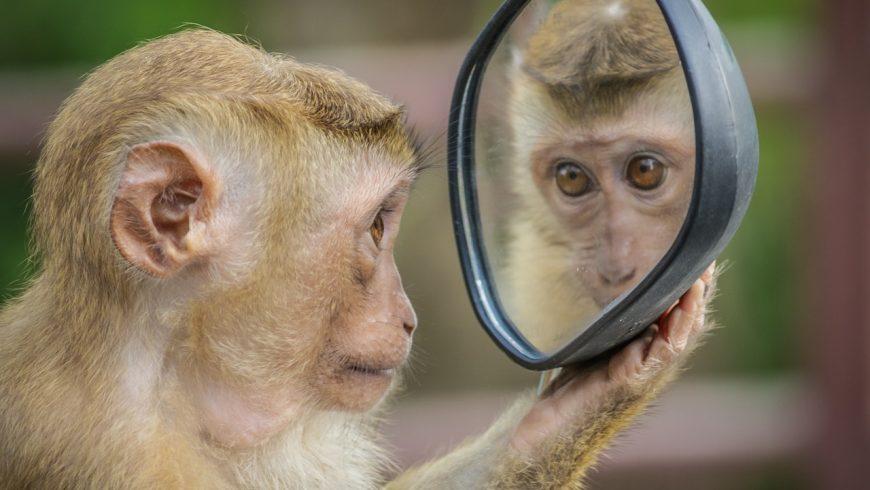 Scimmia allo specchio