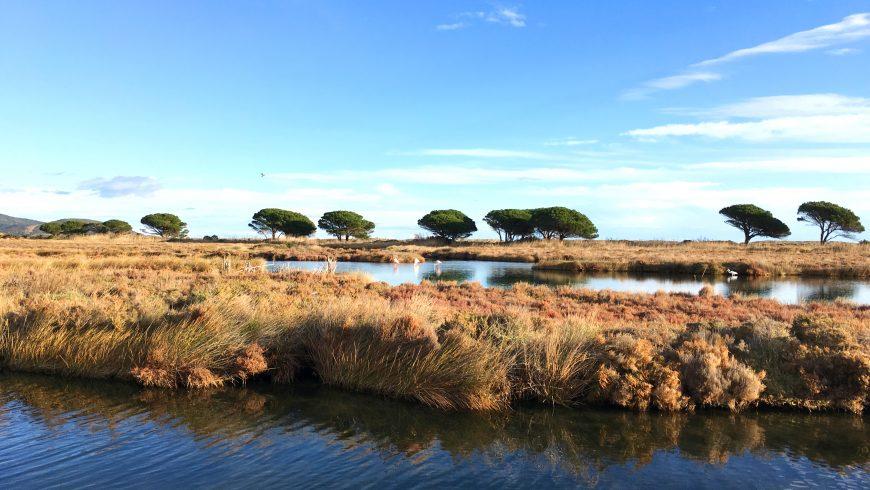 Zona umida nel parco naturale di Tepilora
