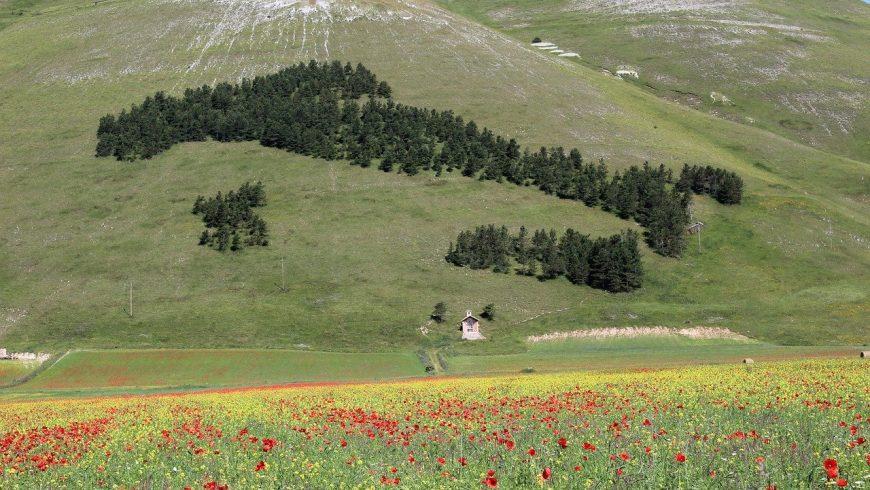 Bosco di conifere a forma di Italia a Castelluccio di Norcia