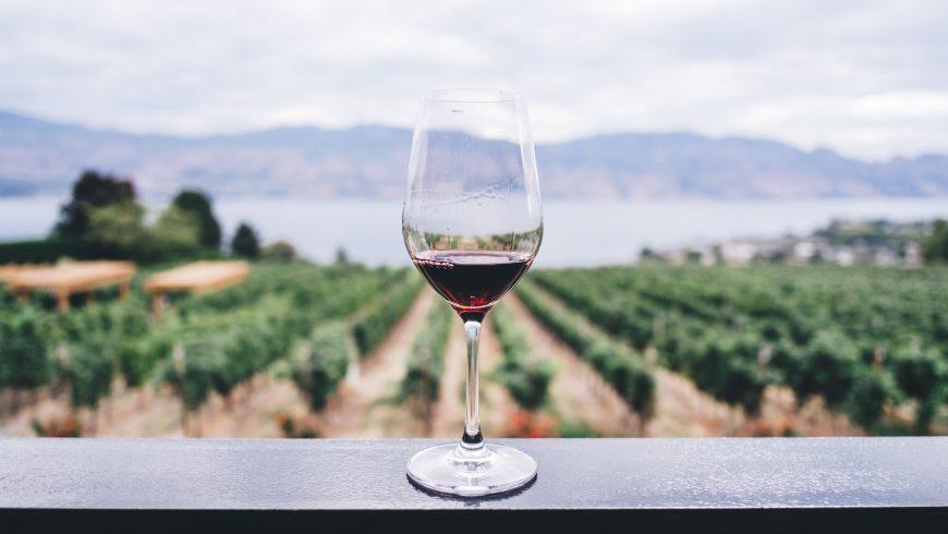 Calice di vino con vigneto nello sfondo