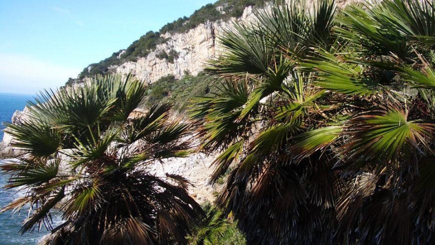 Palme nane in zona Quarto Caldo, nel parco nazionale del Circeo