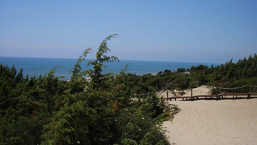 Scorcio della duna litoranea dalla spiaggia di Sabaudia