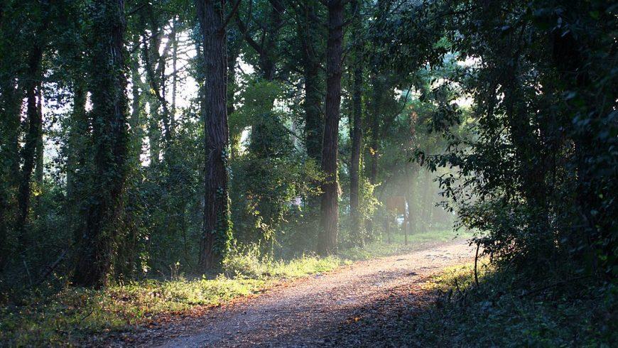 Sentiero nella foresta del parco nazionale del circeo