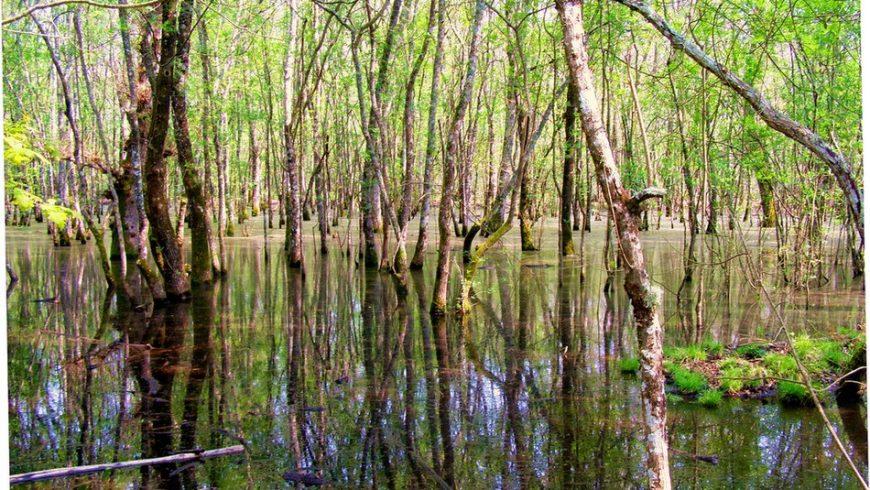 """Tipica """"Piscina"""" nella foresta del parco nazionale del Circeo"""