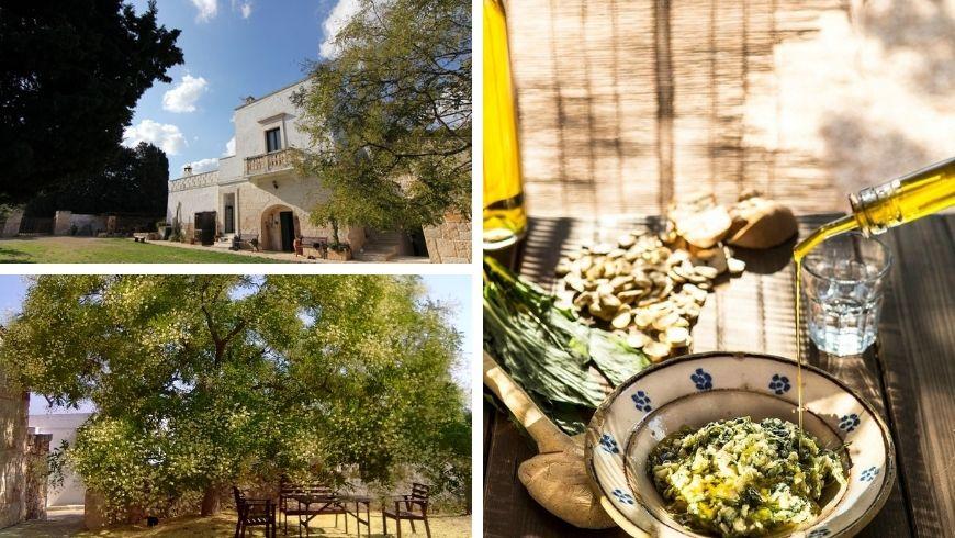 Masseria Bellolio ed ulivi secolari