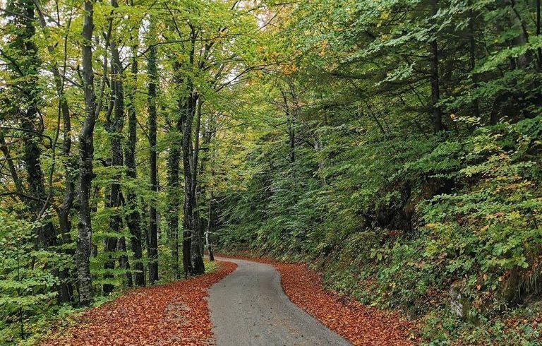 strada nel bosco vicino all'eco-chalet