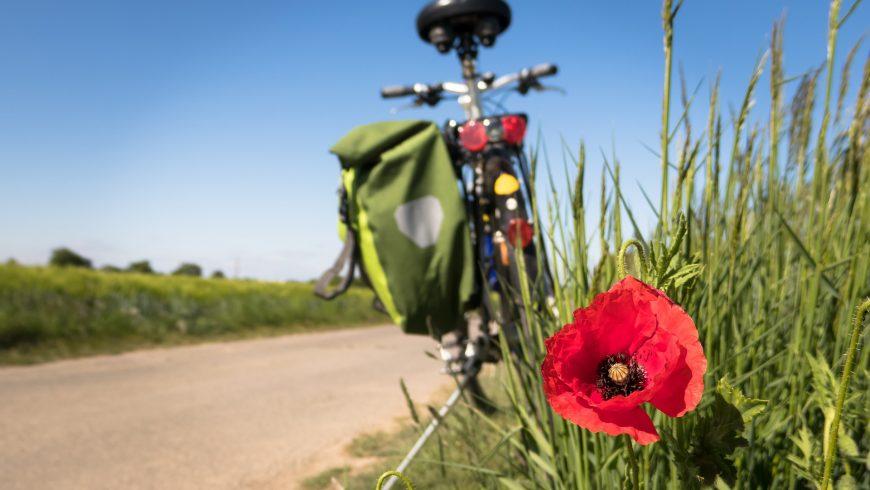 bicicletta papavero