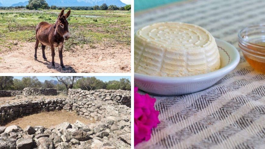 Agriturismo Agripaules, trekking con asinelli e formaggio sardo