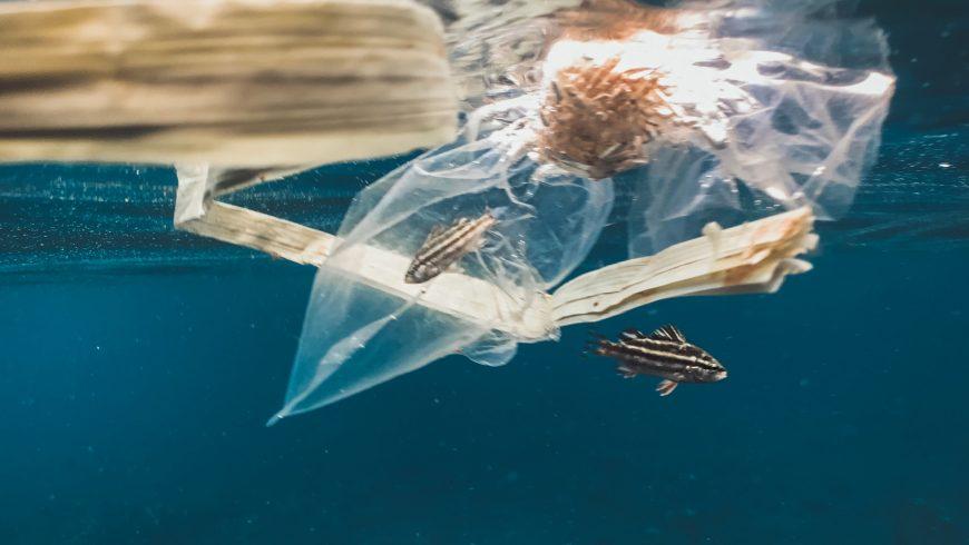 plastica in mare: pesce catturato da una busta di plastica