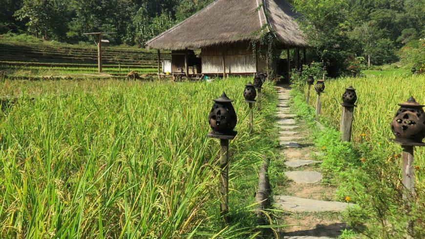 laos campo di riso