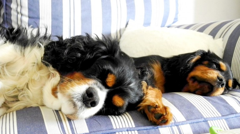 cani che dormono sul divano