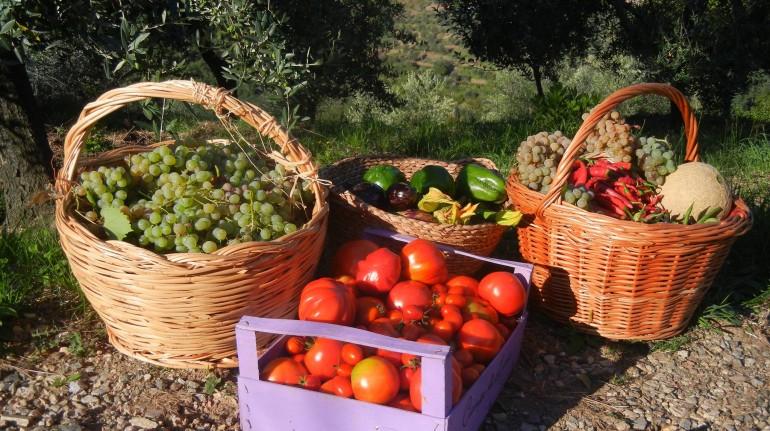 verdure dell'orto biologico agriturismo campo di luna