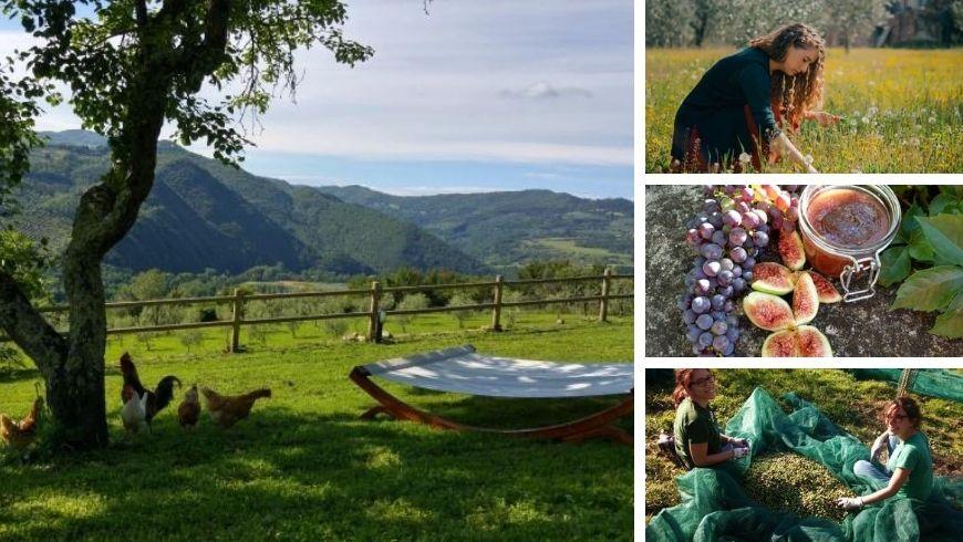 raccolta olive, esperienza contadina all'Agriturismo la Fontaccia, Firenze