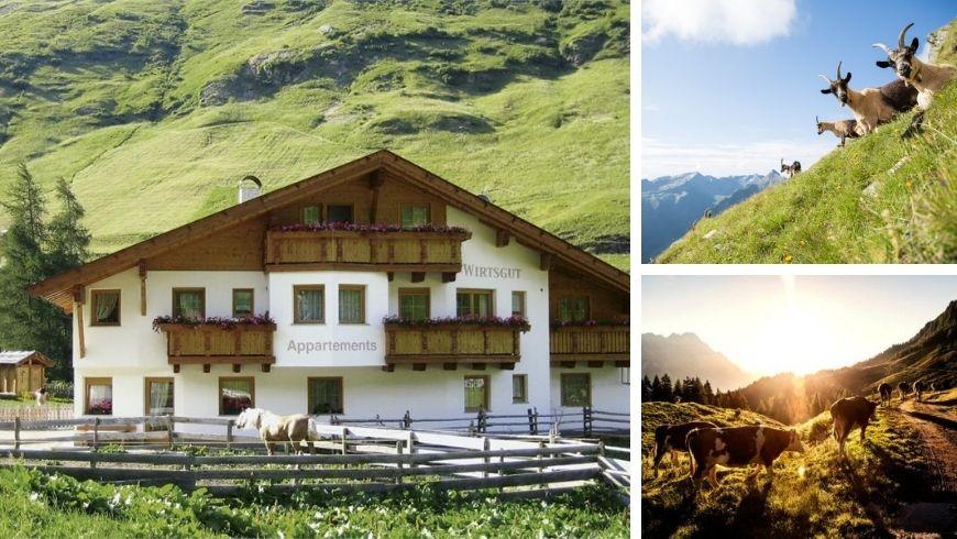 Wirtsguthof struttura alberghiera del sudtirol