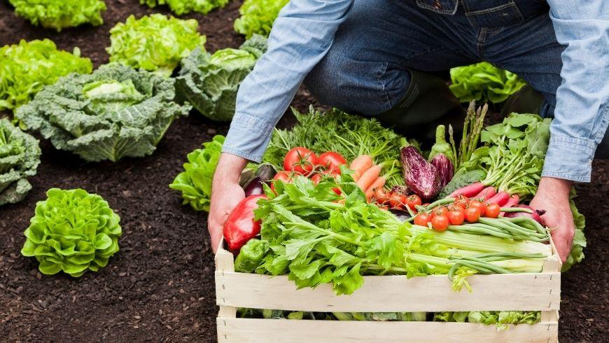 ortaggi appena raccolti dall'orto biologico
