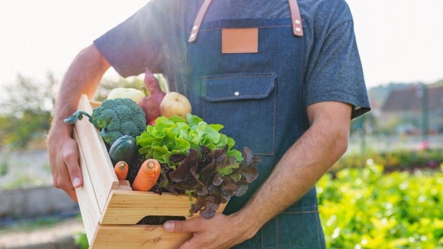verdura biologica appena raccolta