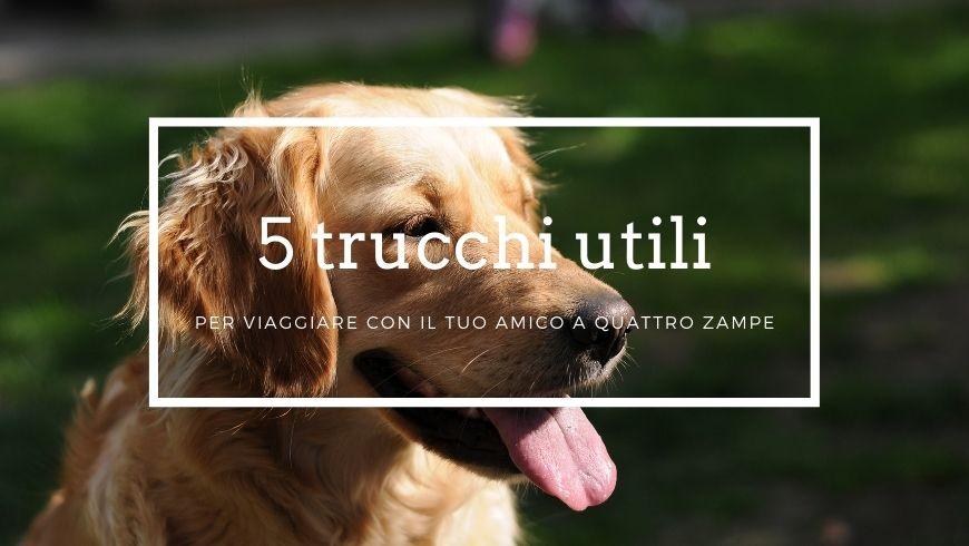 5 trucchi utili per viaggiare con il tuo cane