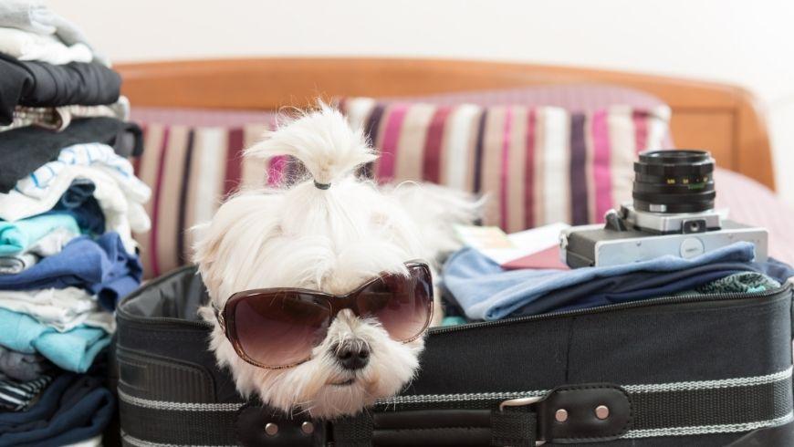 valigia cane