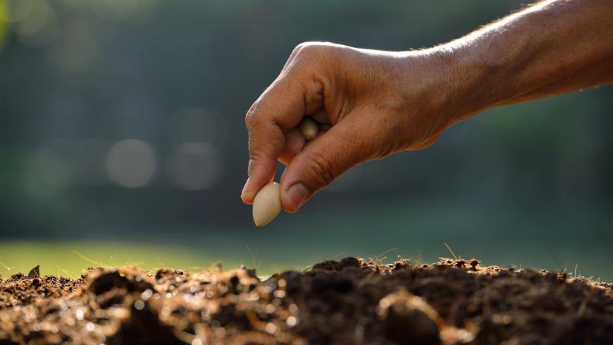 Idee regalo ecologiche per i tuoi dipendenti