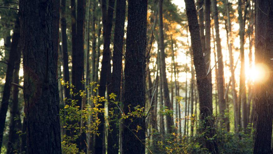 ambiente naturale, in cui vivono gli animali a rischio di estinzione
