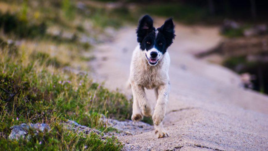 cane in vacanza nella natura