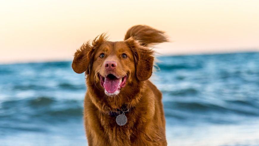 cane con targhetta al mare