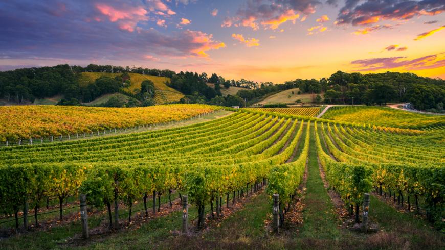 Tra le vigne dell'Italia
