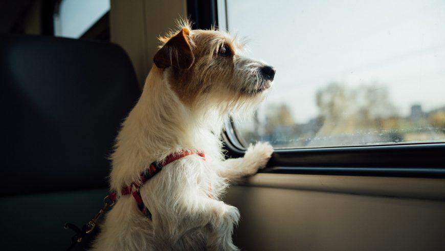 cane che viaggia in treno