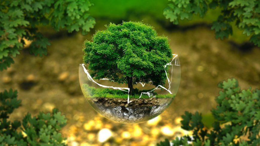 imperdibili libri sulla sosteniblità, la metafora del vetro rotto