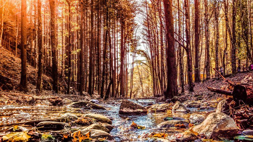 Sentieri tra le foreste Casentines