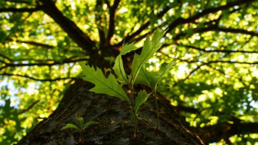 albero natura