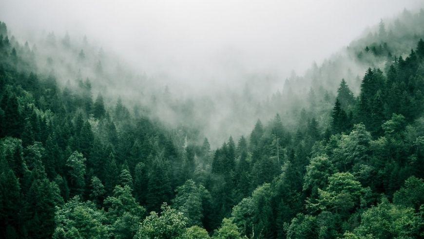 tanti alberi vicini, foresta