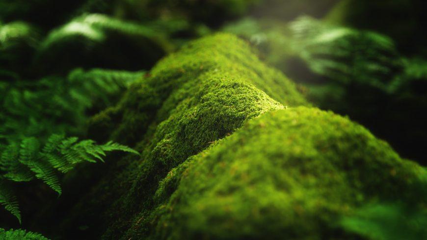 Biodiversità: muschio