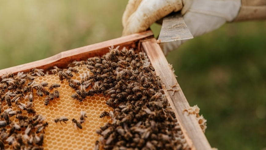 museo del miele, dimaro folgarida