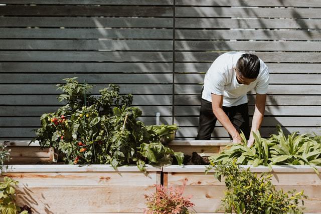 Uomo che coltiva frutta e verdura nel suo giardino eco-friendly