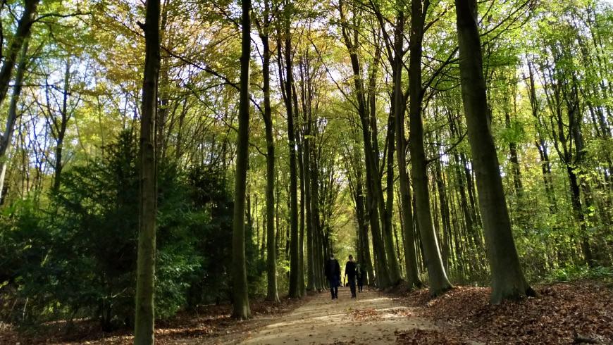 Parco di Bois de la Cambre. Foto di Fabjola Filio Sofia Braho via unsplash.com
