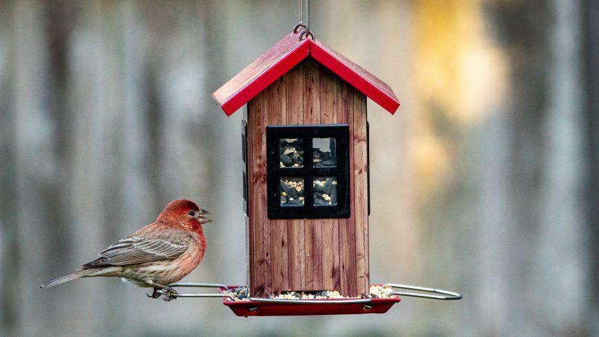 Casetta per gli uccellini
