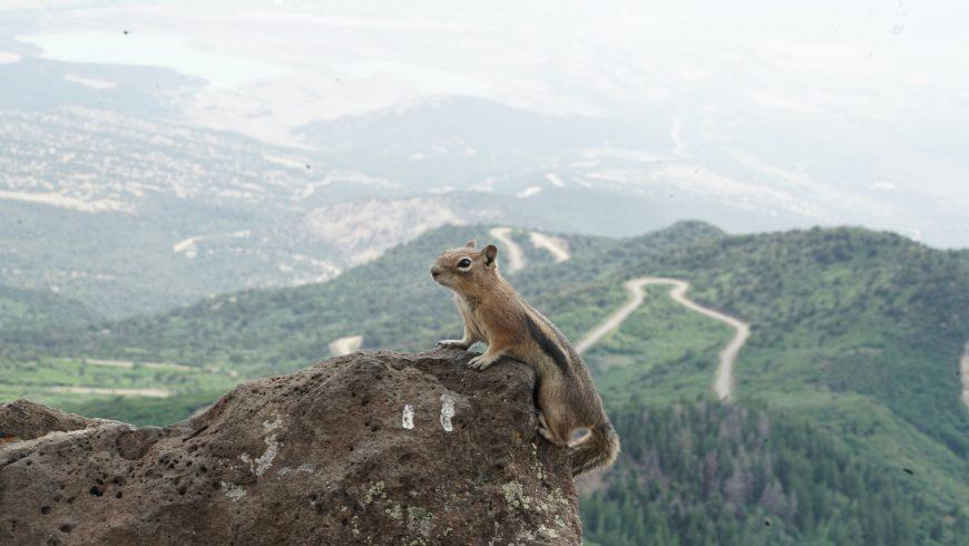 scoiattolo alla grand mesa national park colorado