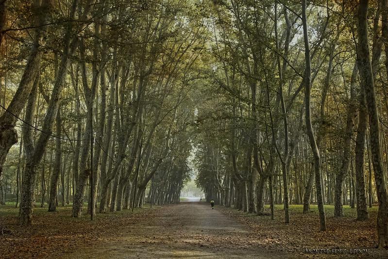 Parco la Devesa, tanti alberi paralleli alla strada a Girona