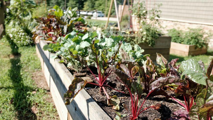 Verdura coltivata nell'orto di casa