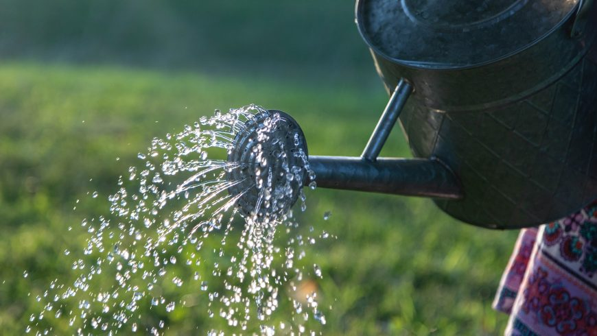 Ridurre gli sprechi di acqua per un giardino eco-friendly