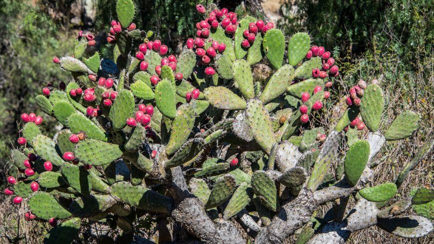 Jardin Botanico el Charco del Ingenio, San Miguel de Allende