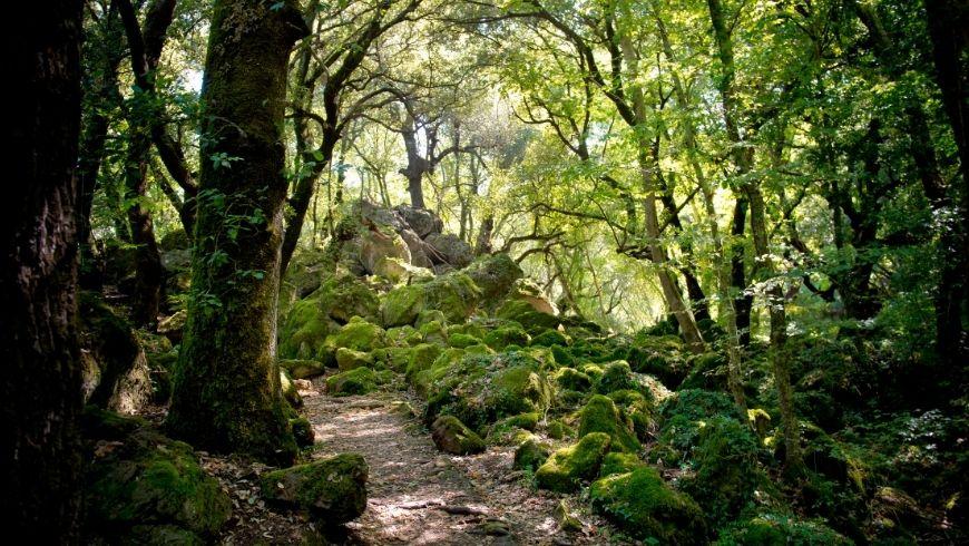 luoghi selvaggi bosco del sasseto