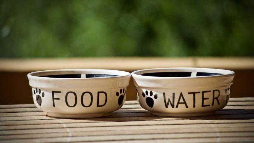 Ciotole per cani. Vacanza sostenibile con il proprio animale