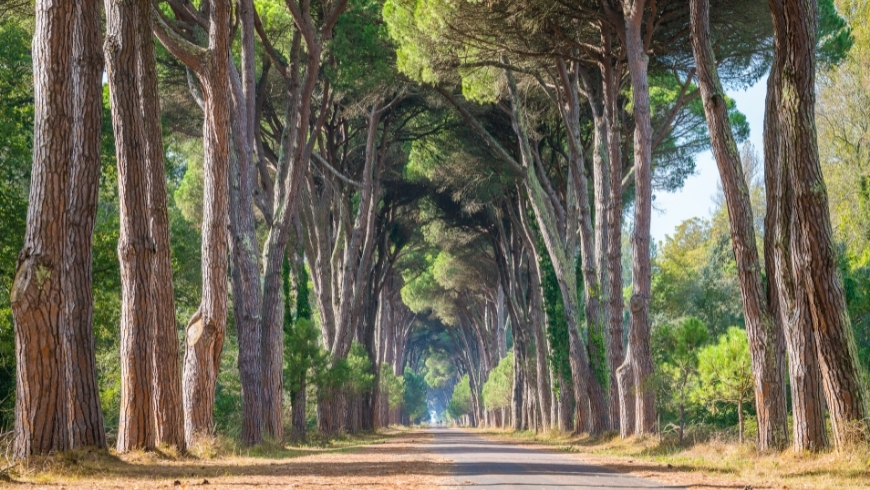 parco naturale di san rossore