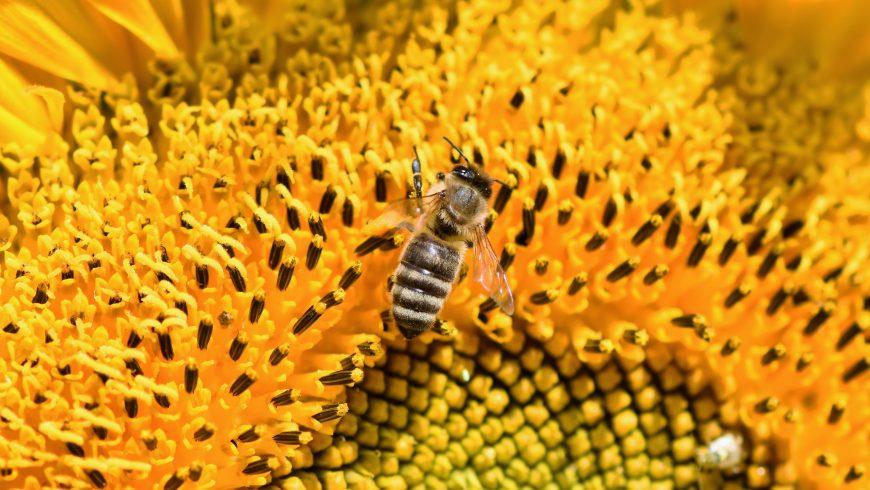 api e biodiversità