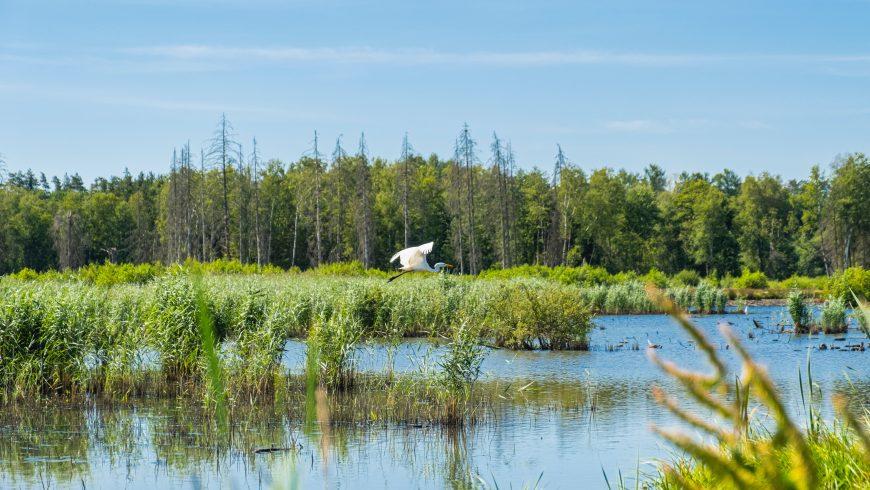 natura, bosco, uccello, lago, biodiversità